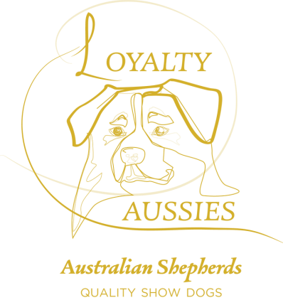 LOYALTY&nbsp;AUSSIES<br />Australian Shepherds<br />Quality Show Dogs